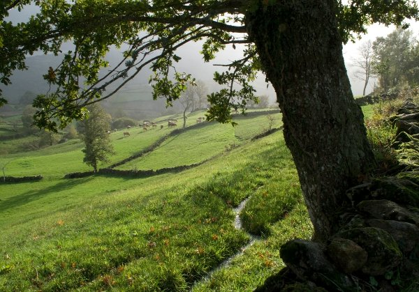 Portugal's Barroso Agro-sylvo-pastoral System awarded GIAHS site