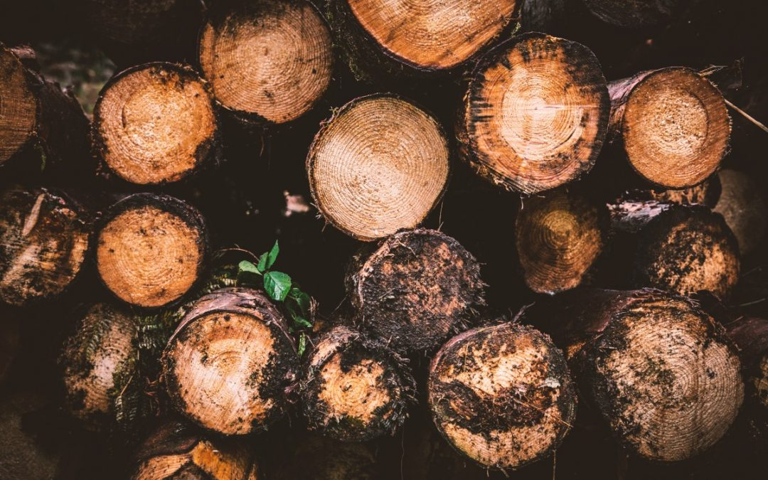 BASOTEK, sustainable forest innovation